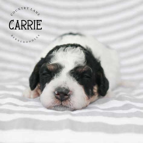Female White Collar - Carrie