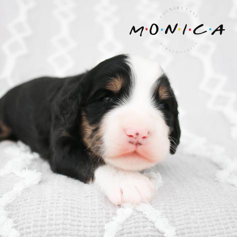 Monica - Yellow Collar Female