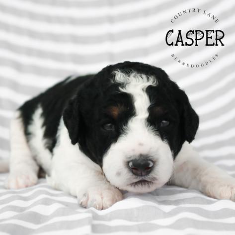 Male Black Collar - Casper