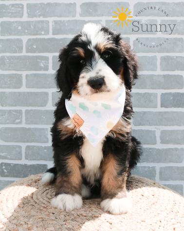 Sunny - Male Blue Collar