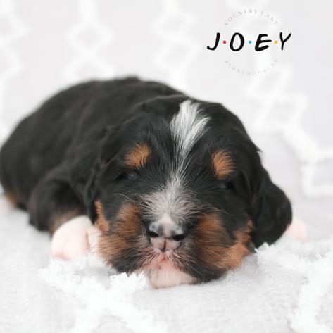 Joey - Blue Collar Male