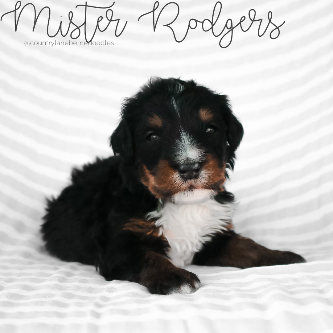 Mister Rodgers Male Black