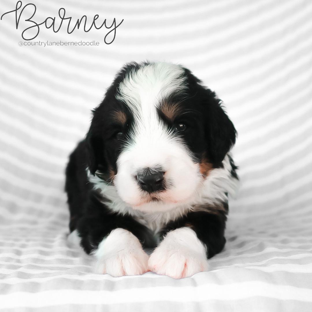 Barney Male Green