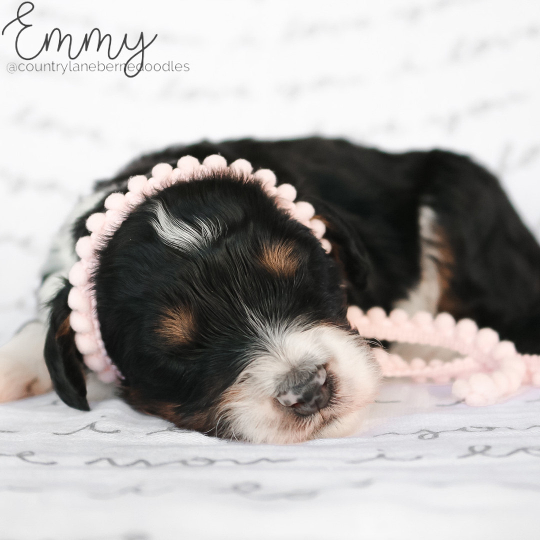 Emmy Female Pink
