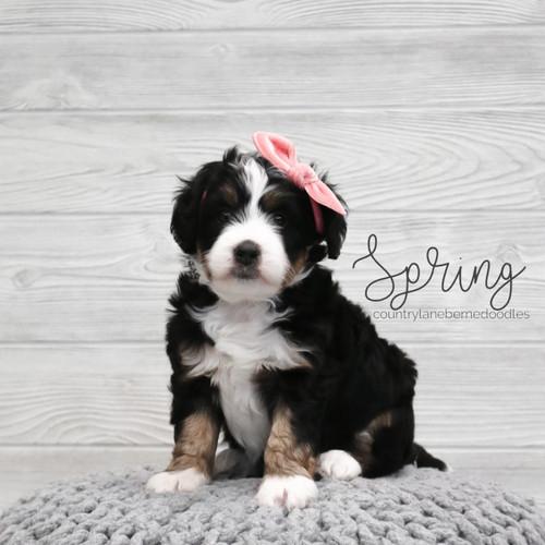 Spring Female Pink