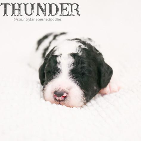 Male Blue Collar - Thunder