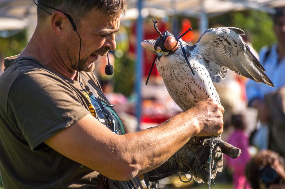 Tisza-tavi Ökocentrum madárbemutató, Poroszló