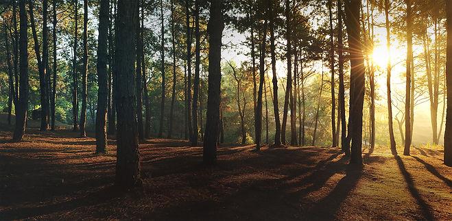 Auringonlasku metsässä