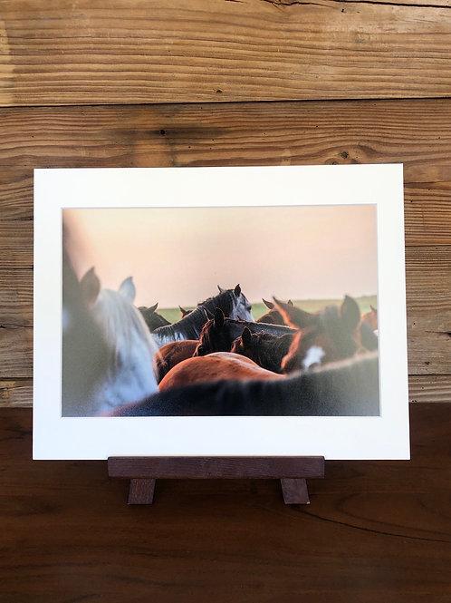11x14 Matted Print | Remuda At Dawn