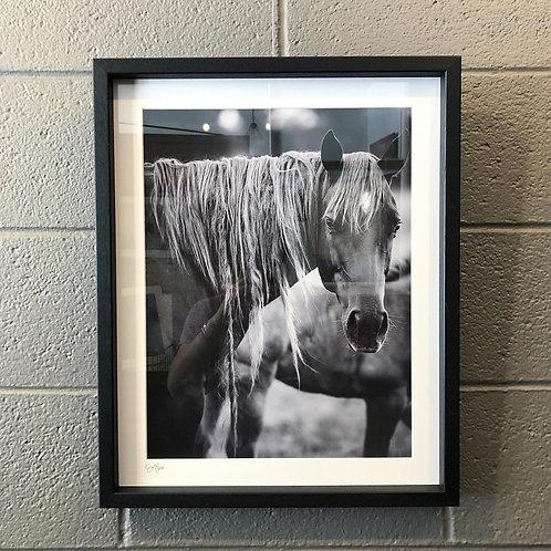 """""""Hippie Mare""""   19x23 Framed Print"""