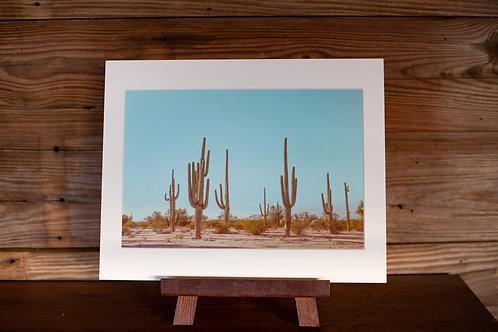 """11x14 """"Sonoran Desert Soldiers"""""""