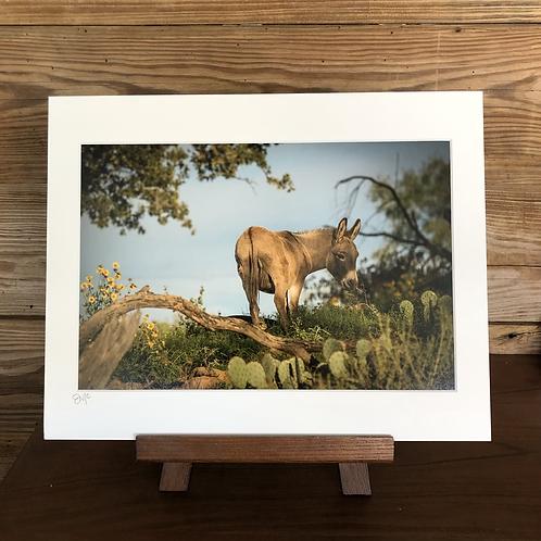 "11x14 Matted Print ""Wildflower Walking"""