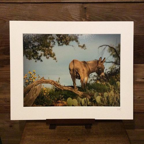 "16x20 Matted Print ""Wildflower Walking"""