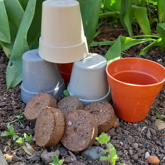 Bamboo Fibre Pot, Compost And Seed Of Your Choice
