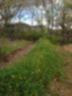 Swale Permaculture Ardèche NumiaH