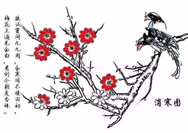 švestkový květ.jpg