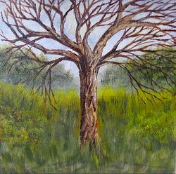 Árvore Nua