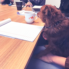 volta dog sitting at table running a meeting