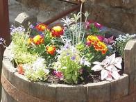 Apa_Vie_Romania_blossoms.jpg
