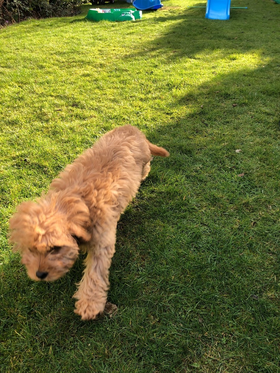 Pet Sitting Gloucester, Pet Sitter Gloucester, Dog Walking Gloucester, Dog Walker Gloucester