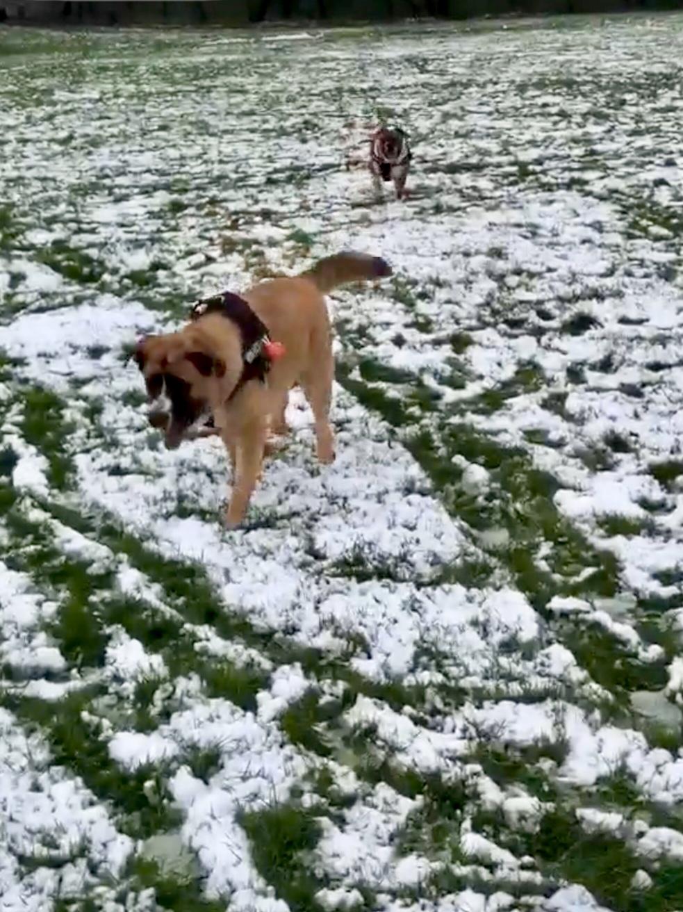Dog Walking in Gloucester, Dog Walker in Gloucester