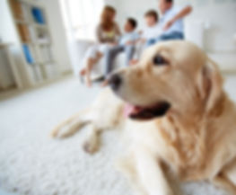family and dog on clean carpet by Clean Rite Floor Care Services