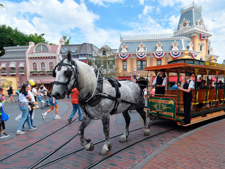 Disneyland has a new horse working on Main Street. Meet Bert!