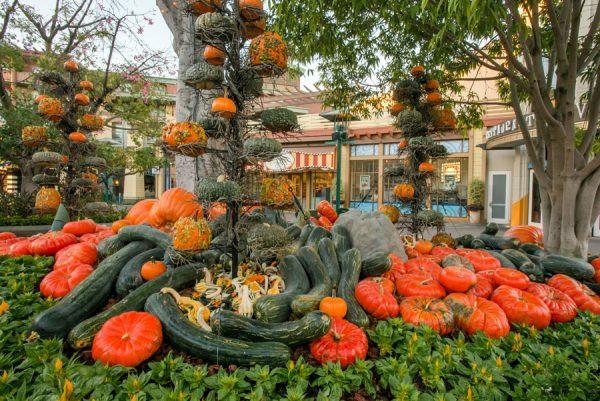 Autumn in Downtown Disney Gourds