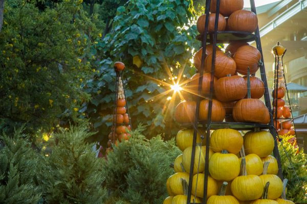 Autumn in Downtown Disney Pumpkins