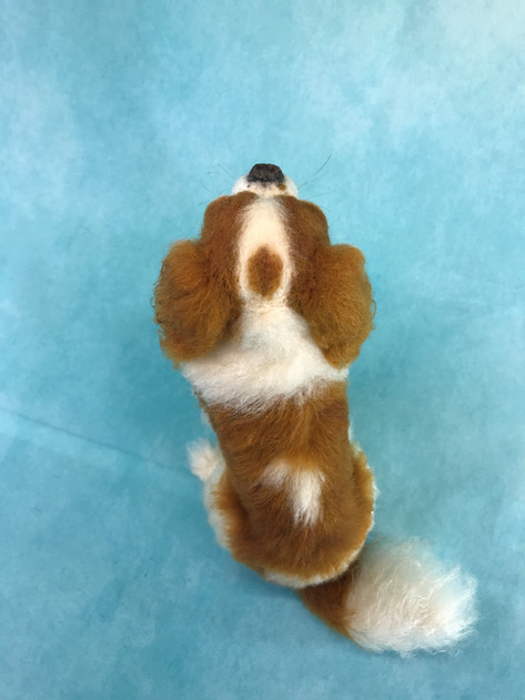 Top view CKC Spaniel