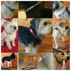 ChicktinCreations.collars