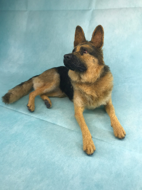 GSD laying down1