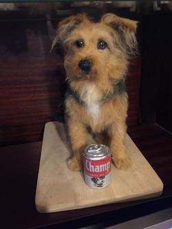 ChicktinCreations.terrier.tinfood
