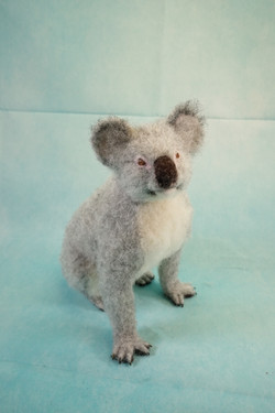 Koko Koala