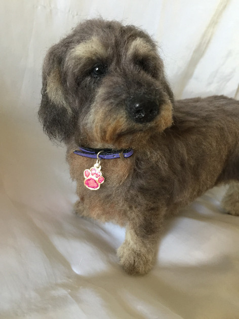 ChicktinCreations Wire haired Dachshund