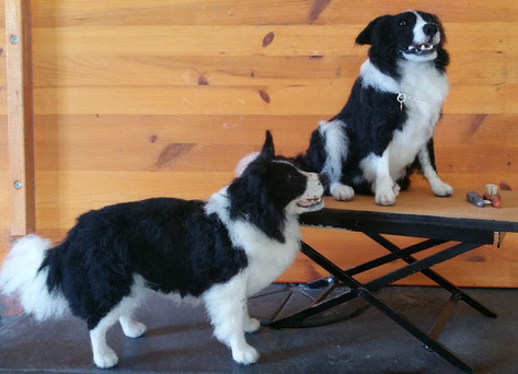 chicktincreations.bordercollies