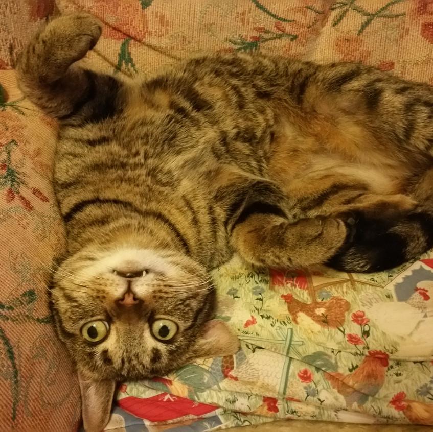 Smonks just had some catnip!