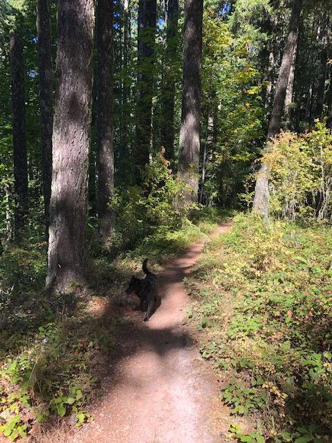 Hardesty Mountain Trail Shuttle