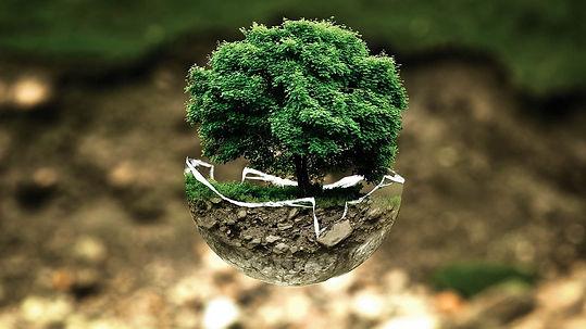 arbre dans verre.jpg