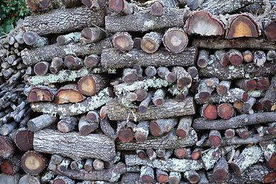 wooden-log-1260100_960_720.jpg