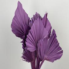 Palm Spear, Light Lavender