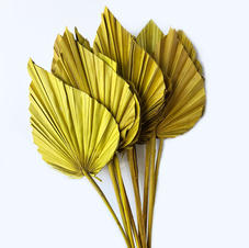 Palm Spears Yellow