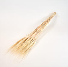 Bearded Wheat White