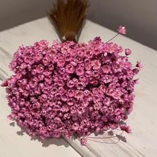Glixia, Lavender
