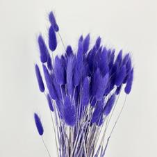 Bunny tails, Blue Violet