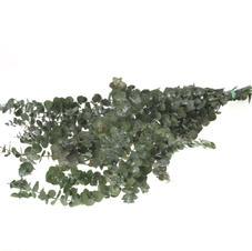 Baby Eucalyptus Green