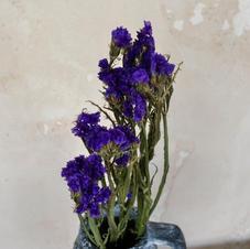 Sea Lavender Purple