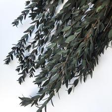 Eucalyptus Parvie