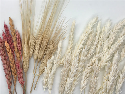 Assorted Dried Wheat