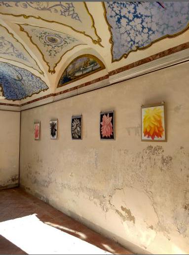 Shane Guffogg (installation view)